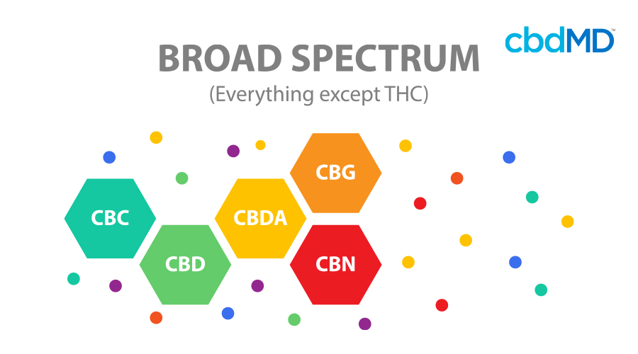 A colorful diagram shows the different cannabinoids in broad spectrum cbd