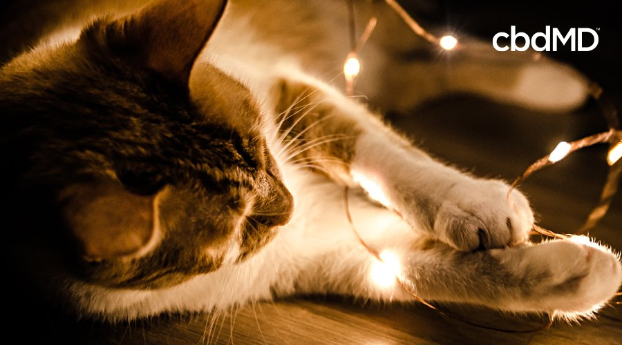 A brown and white cat lays on the floor and plays with stringlights