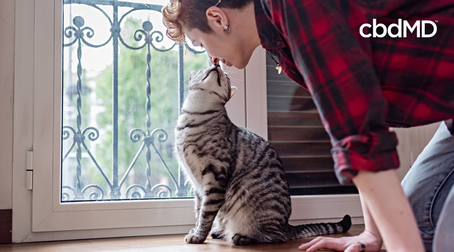 A man in a plaid shirt leans over to give his kitty cat a kiss on the nose