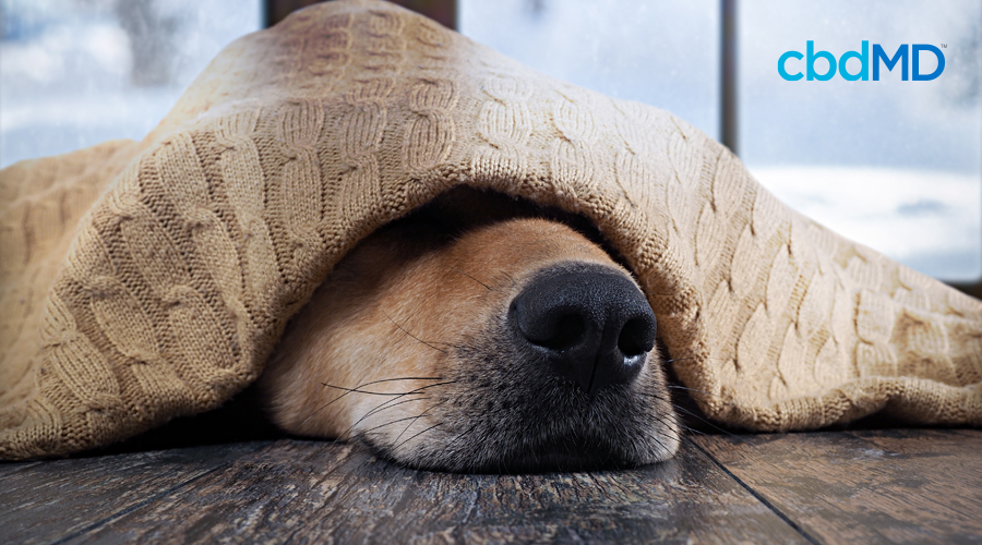 A dog's nose sticks out from under a blanket with snow falling down through the window behind
