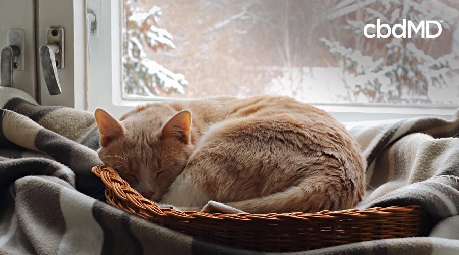 A yellow tabby cat lays curled up on a bed next to a window with snow falling outside