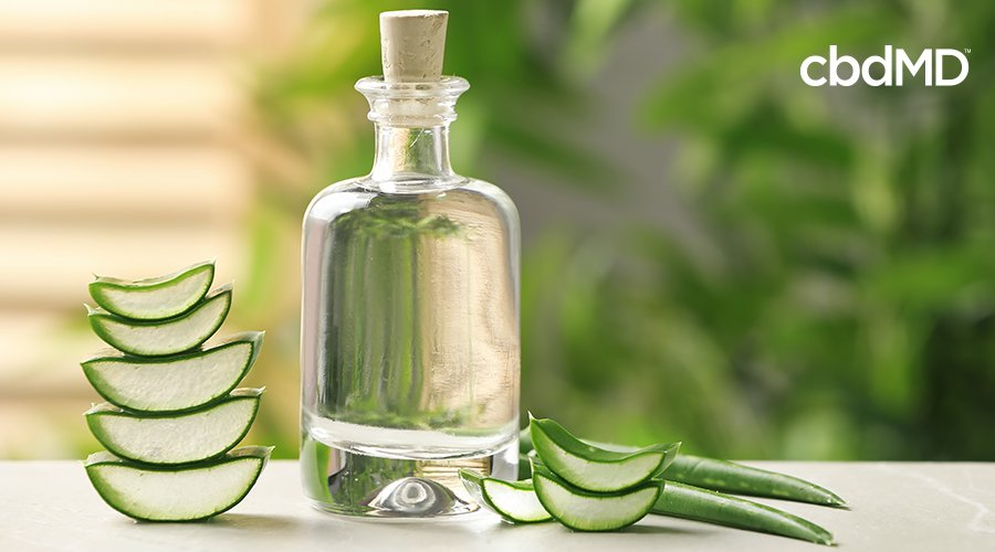 What Is Aloe Vera Good For: Acne, Sunburns, and More!