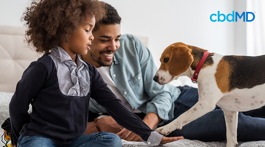 National Pet Appreciation Week: Why We Love Our Pets