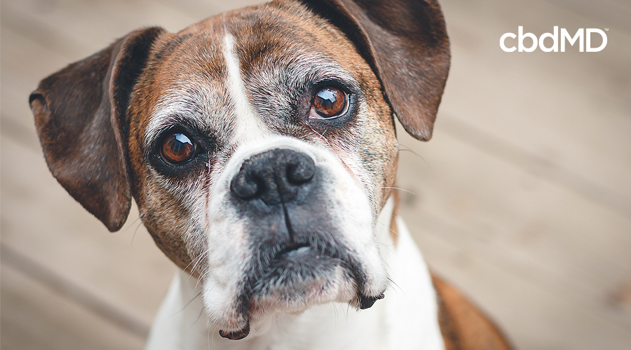 Adopt a Senior Pet: Now is the Perfect Time