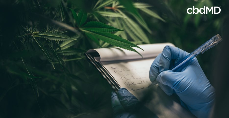 7 Reasons Why CBD Is So Expensive