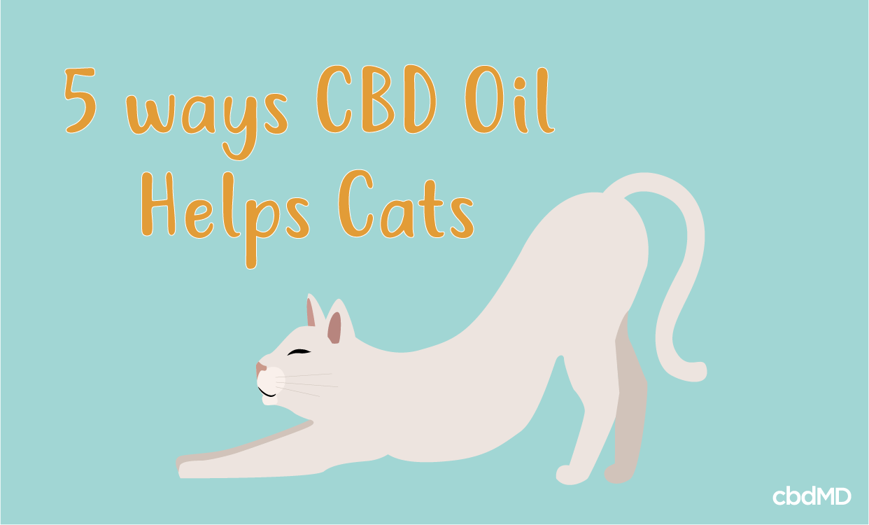 How can CBD Oil Help Your Cat?