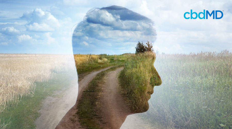 CBD and Mindfulness: Being More Present in Daily Life