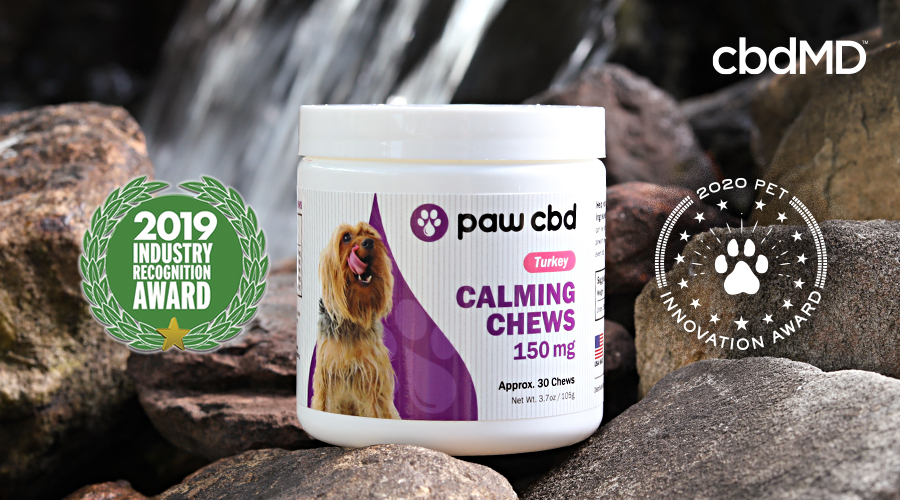 CBD Pet Calming Oil Products for the Win
