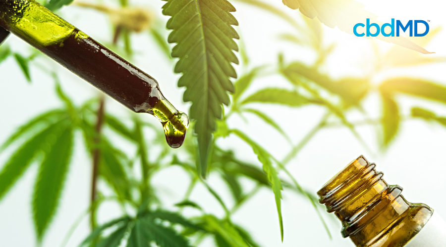 The Complete Guide to How CBD Oil is Made