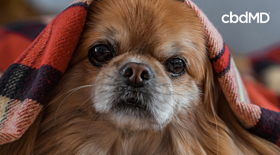 How to Identify the Critical Signs of Stress in a Dog