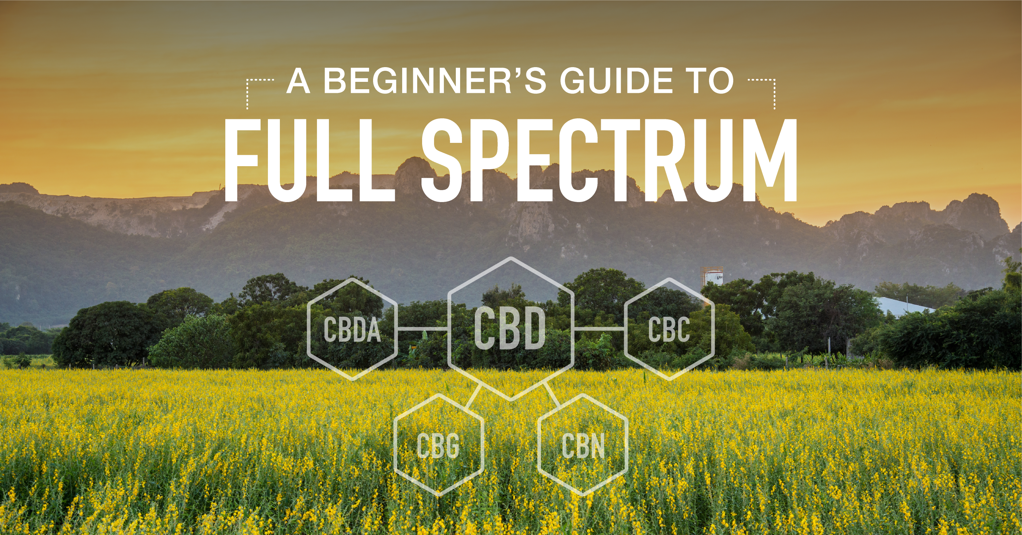 A Beginners Guide to Full Spectrum CBD Extraction