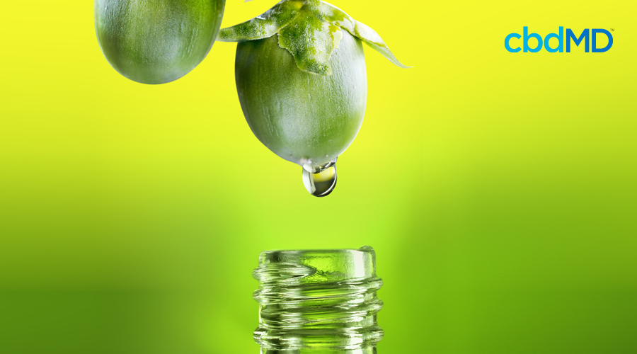 How Jojoba Oil Helps Hydrate Your Skin