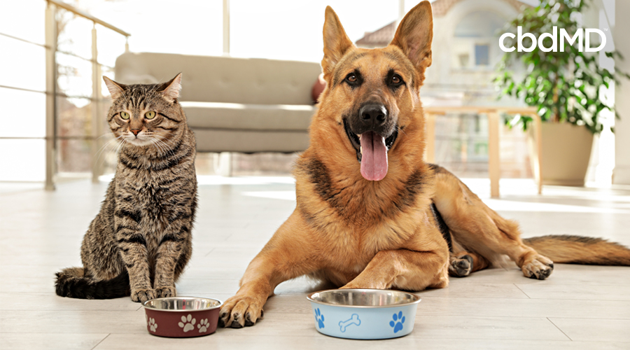 Making Smart Choices for Your Pet's Wellness