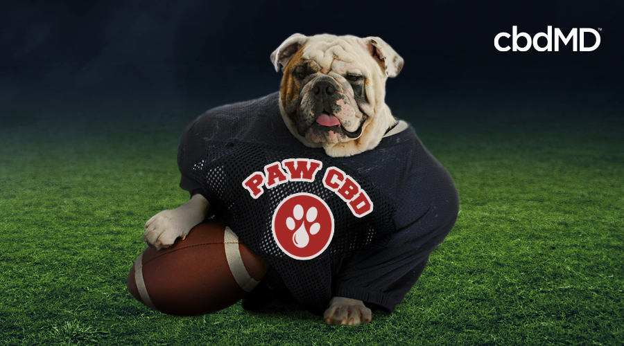 Paw CBD Joins the Festivities of Puppy Bowl XVII