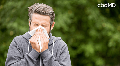 Can CBD Help Relieve Spring Allergies?