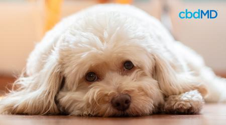 Heartworm Symptoms In Dogs: Here's What to Look for