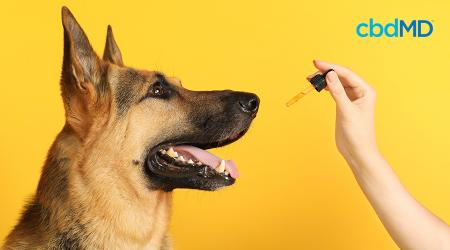 CBD for Dogs: Is CBD Safe for Dogs?