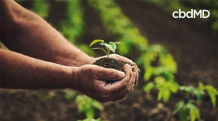 Hemp and Organic Farming: How to Cultivate the Best CBD