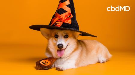 Halloween Pet Safety Tips to Keep Your Best Friends Safe