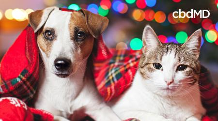 December Holiday Safety Tips for Pets