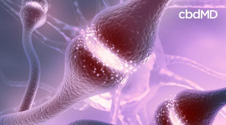 5 Ways to Strengthen Your Endocannabinoid System