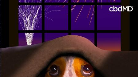 Keep Your Dog Calm During Fireworks This 4th of July