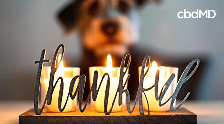 Pet Safety Tips for Thanksgiving