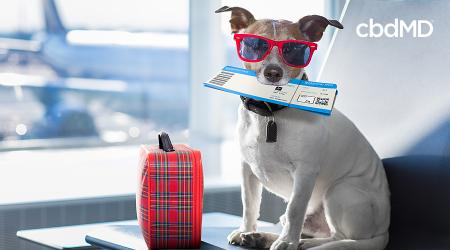 Travel with Pets: Helpful Tips for Taking Trips