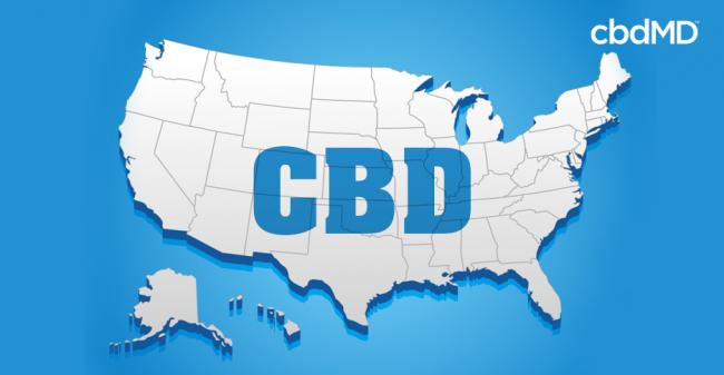 Is CBD Oil Legal? Here is Where You Can Buy CBD Legally