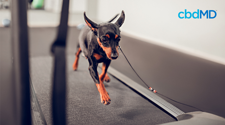 Ways to Get Your Dog Exercise Indoors and Keep Them Healthy