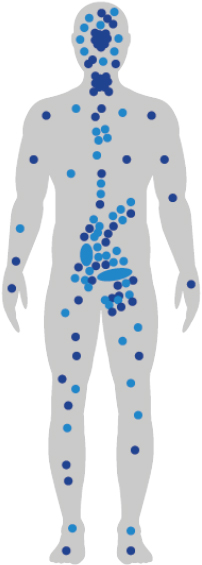 An outline of the human body demonstrates the location of CB1 and CB2 receptors with light blue and dark blue dots