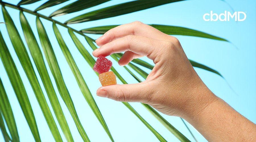 A person holding two cbdMD gummies.