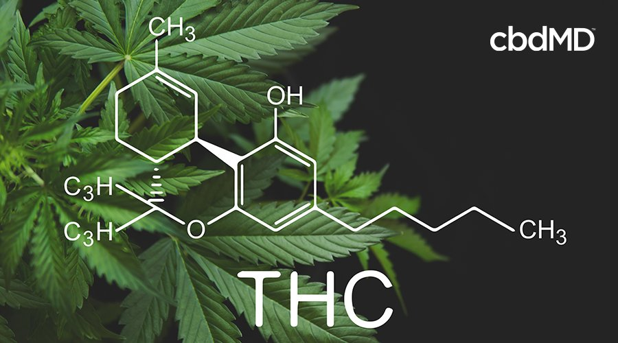 The molecular structure of THC is shown over a dark green field of cannabis