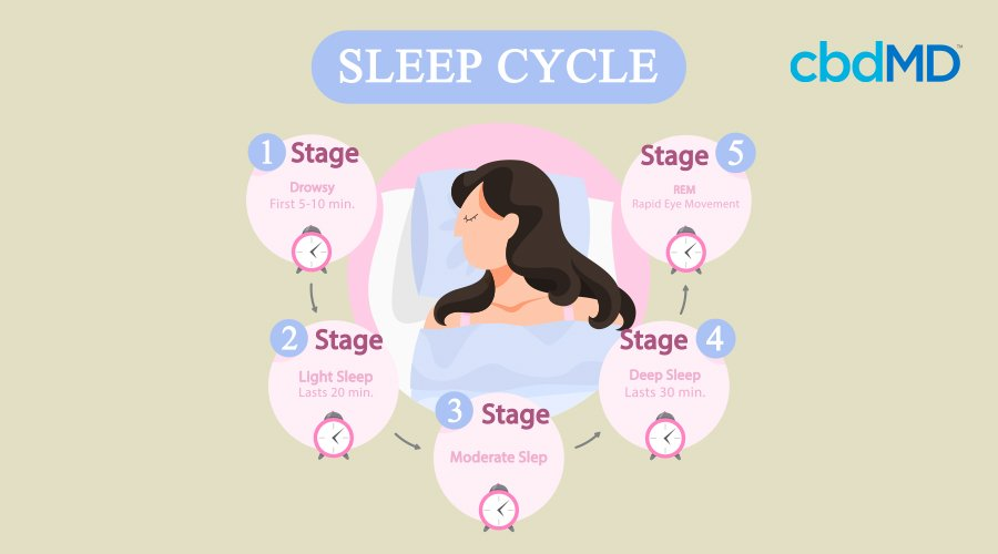 infographic explaining the 4 stages of sleep cycles