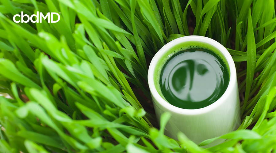 A white coffee cup full of green juice sits nestled among tall grass