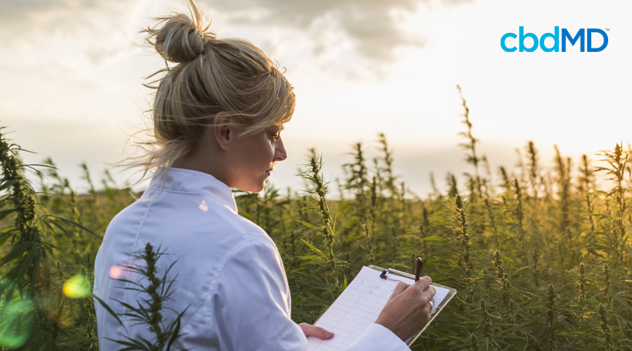 Light-haired woman in white shirt stands in a field of cannabis plants with clipboard and pen
