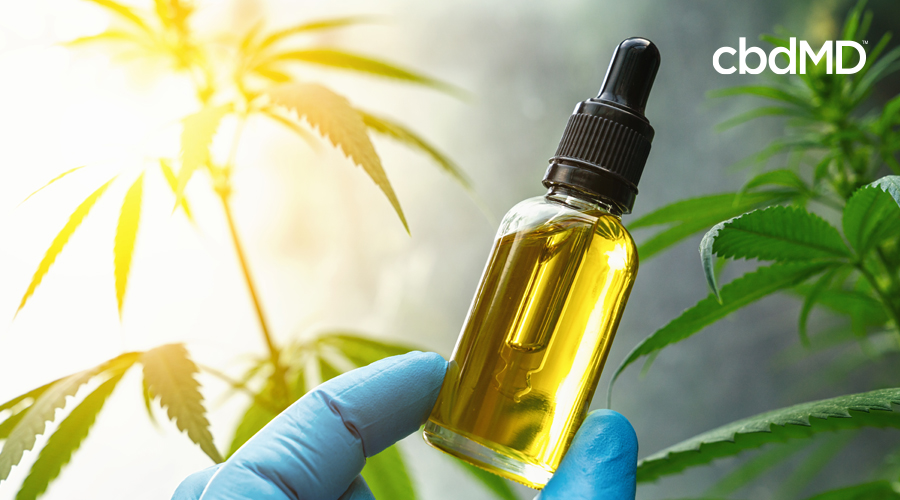 A blue gloved hand holds up a clear glass bottle of amber CBD oil in front of mature hemp plants