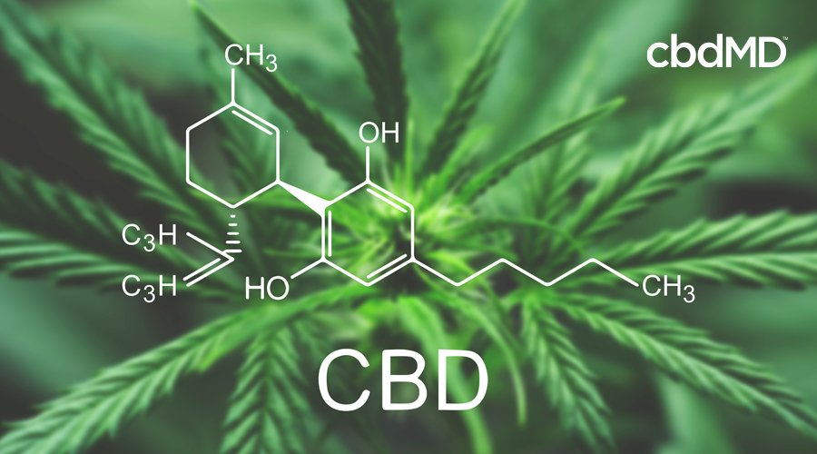 A diagram shows the chemical composition of CBD over a mature hemp plant