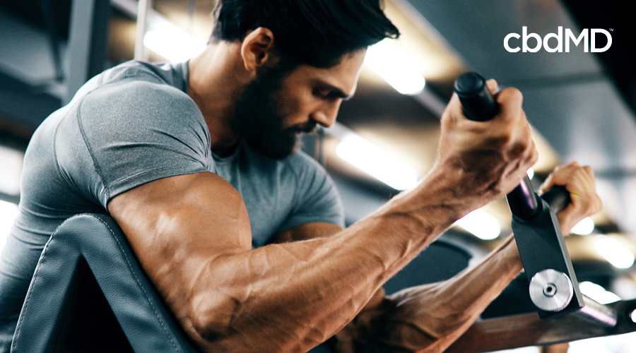 Fit man with dark hair and beard using bicep curl machine in gym