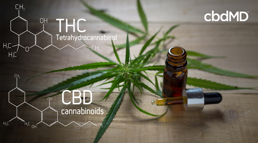 A brown, glass bottle of CBD oil with a full dropper sits on a wooden table beside a hemp plant with a diagram of the chemical make up of THC and CBD