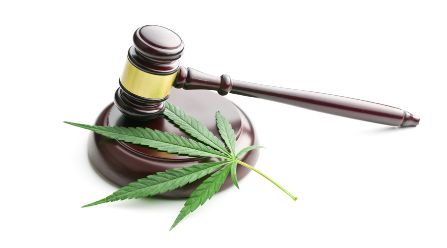 A gavel on a white background sits next to a mature cannabis leaf
