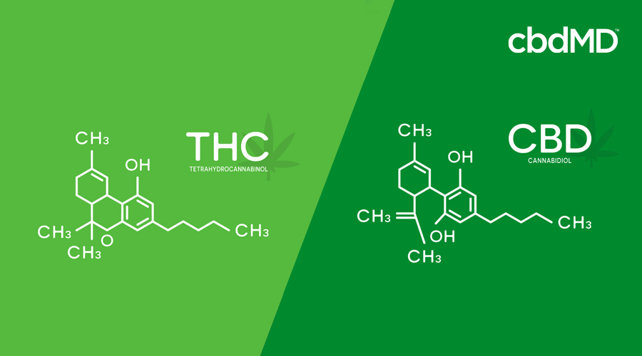 Graphic showing molecular structure of CBD and THC on light green and dark green background
