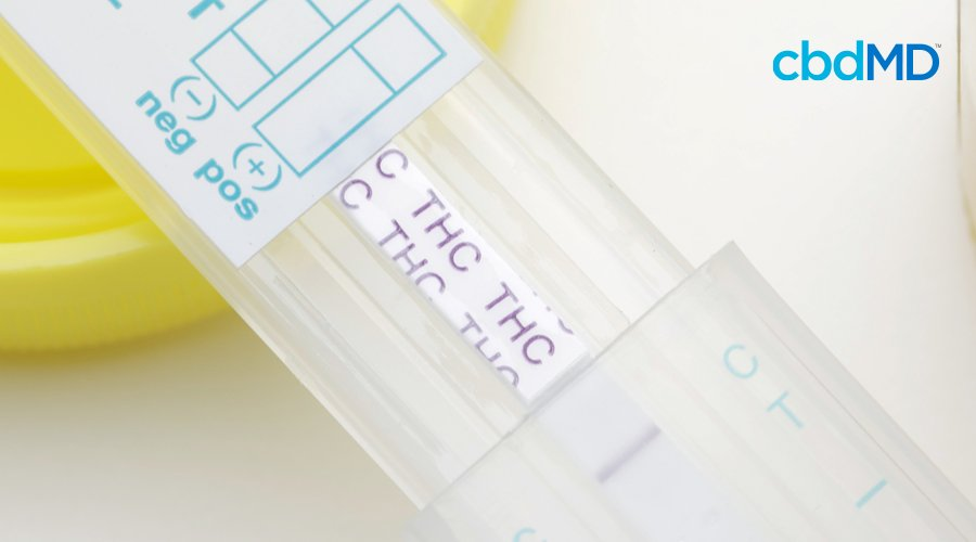 A clear testing strip shows the results of a THC test