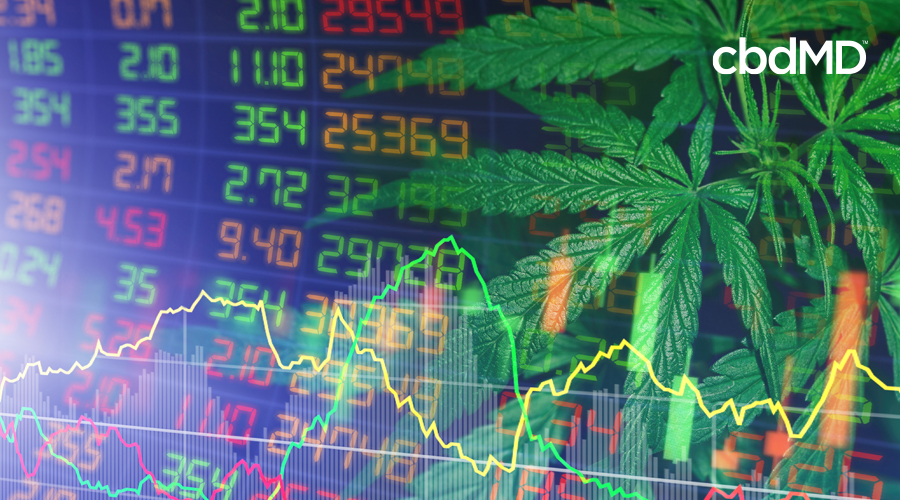 Hemp leaves laid over a stock ticker with line graph