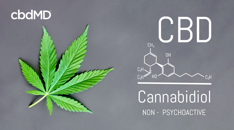 A hemp leaf sits on a gray background next to the chemical diagram for cannabidiol