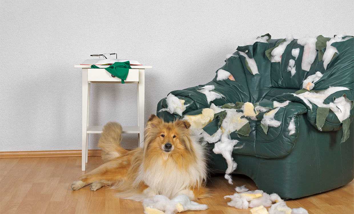 Dog with ripped up chair