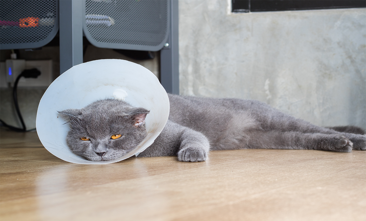 Kitty with Cone