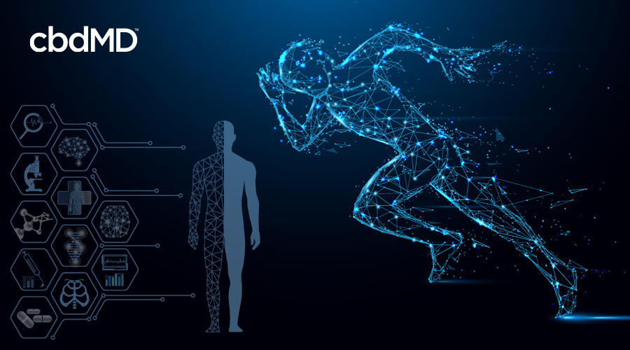 A human form made of constellations sprints next to a diagram showing the systems of the body