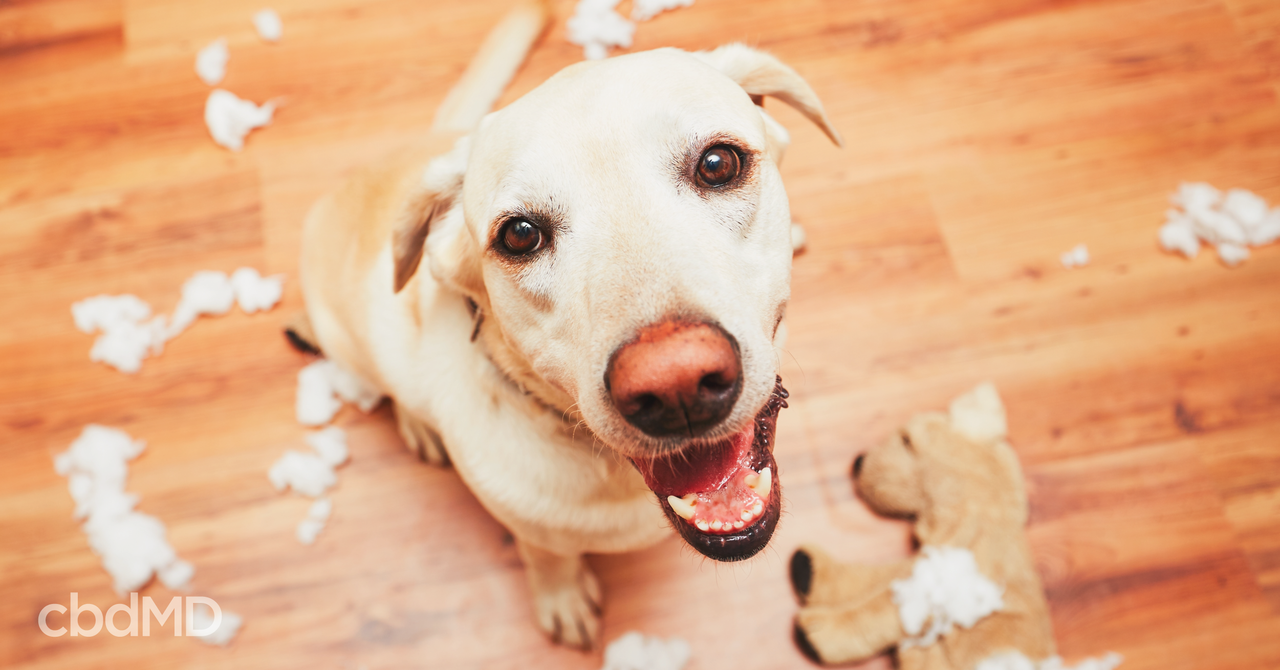 CBD Can Help Calm Your Crazy Pup