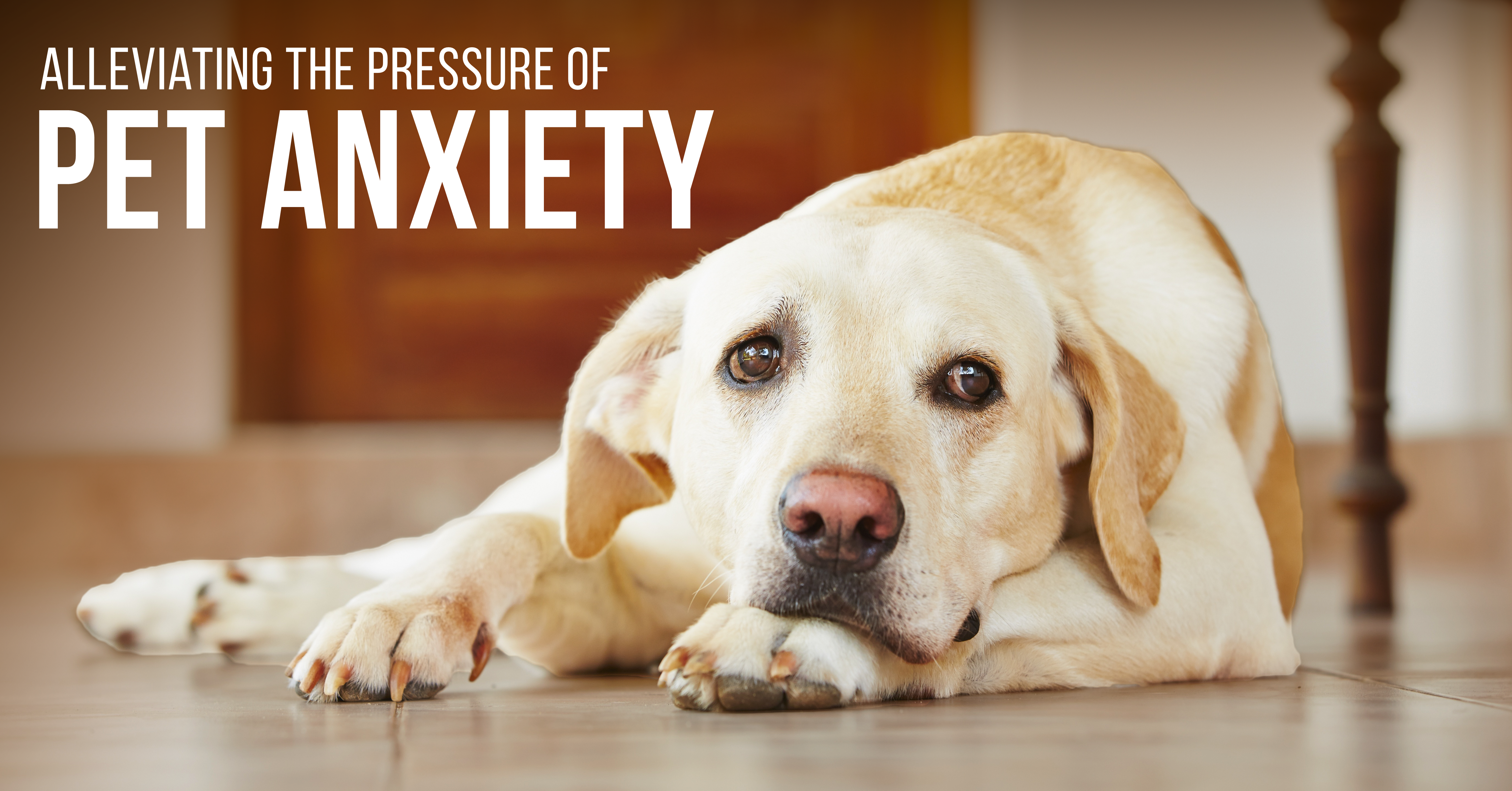 Alleviating the Pressure of Pet Anxiety